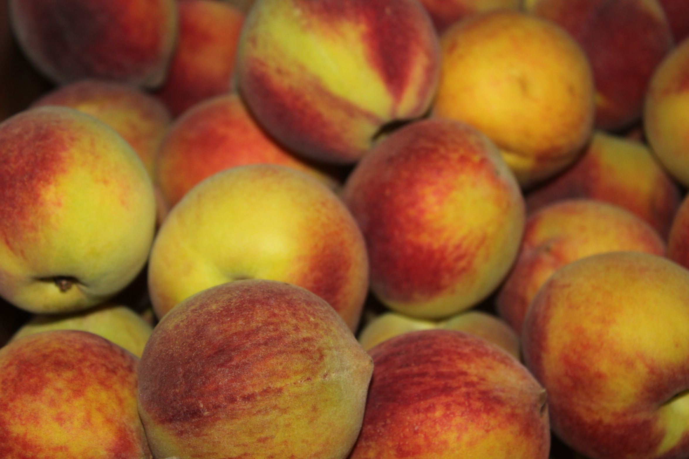 Our peaches arrived from Georgia this week during a Peach Tour.