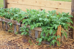 Crates are a great way to grow veggies in small spaces