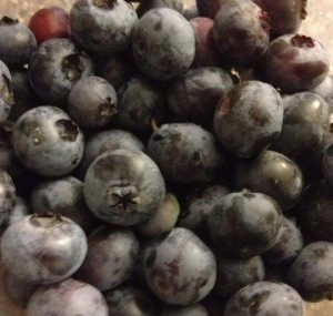 Fresh picked blueberries from our bushes at the farm