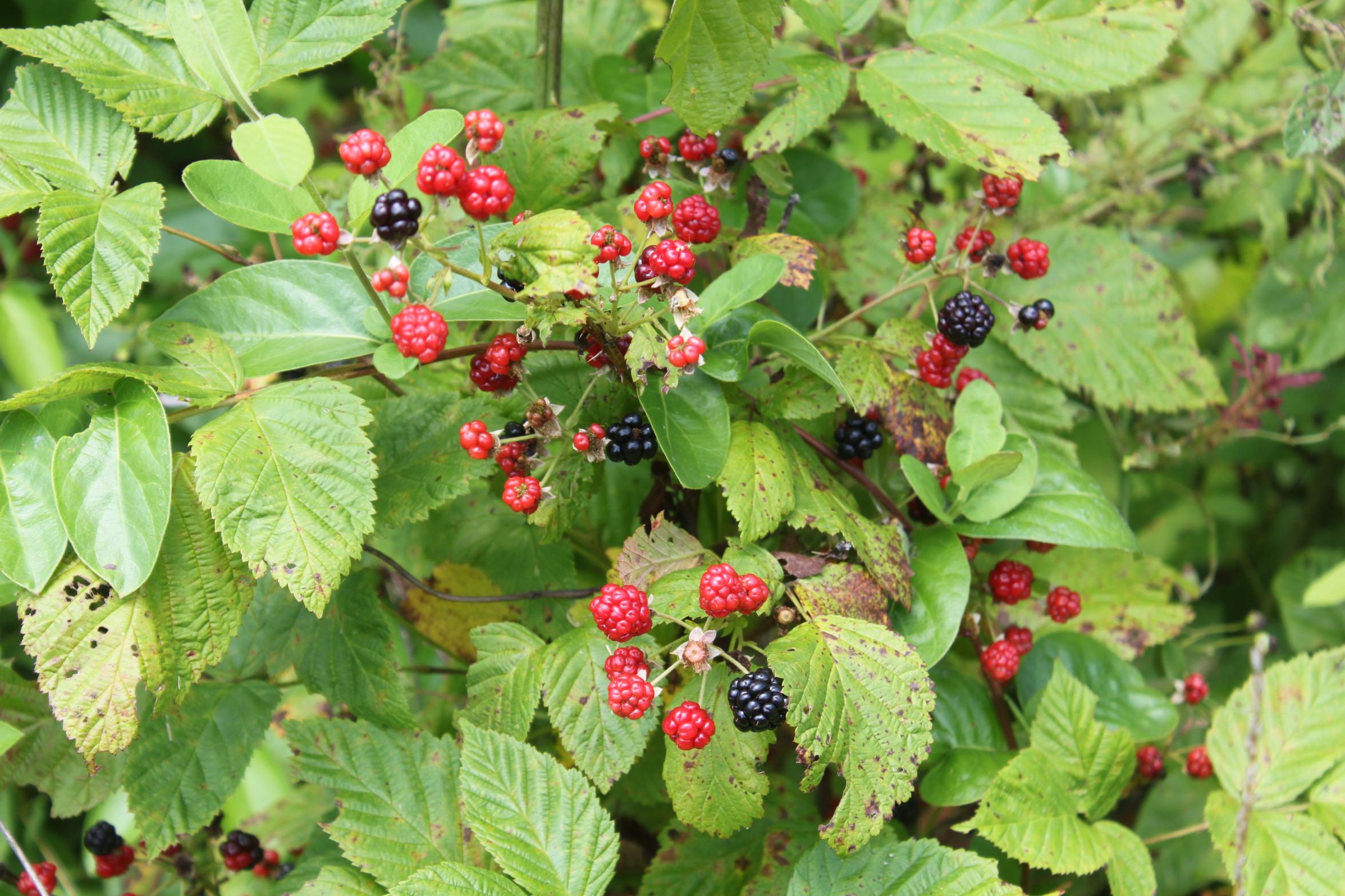 Blackberry Chia Seed Jam - 3 Ingredients - 878.7KB