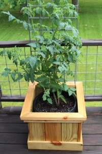 Whether a patio planter - or a full-fledged garden - everyone should grow something they eat